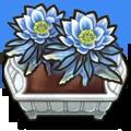 Crop Dragonflower F plant.webp