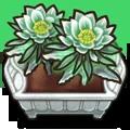 Crop Dragonflower A plant.webp