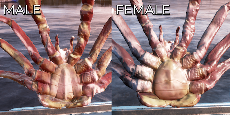 MalevsFemale.png