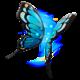 Flutter Wings.png
