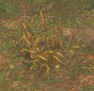 Env wheat.jpg