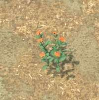 Env milkweed.jpg