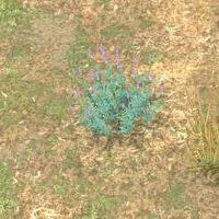 Env lavender.jpg