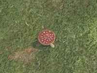 Env amanita mushroom.jpg