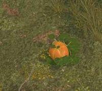 Env pumpkin.jpg