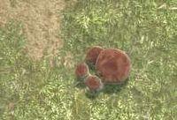 Env penny bun mushroom.jpg