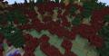 BiomesOPlenty MapleWoods 2.png