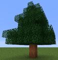 Tree Red Cedar.png