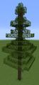 Tree Fir (Redwoods).png