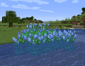 Blue pickerelweed.png