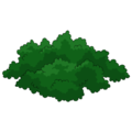Boxwood Bush.png