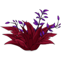 Cordyline Flower Bed.png