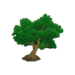 Beech Tree.png