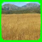 Terrain Grassland Thumb.png