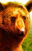 Brown Bear.png