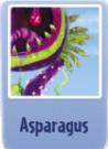 Asparagus ch.PNG
