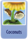 Cocnuts sf.PNG
