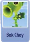Bok choy.png
