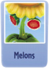 Melons sf.PNG