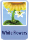 White flowers sf.PNG
