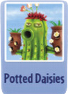 Potted daisies.png