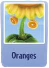 Oranges sf.PNG