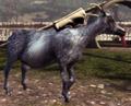 Hitchhiker Goat