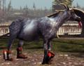 Rocket-Skate Goat