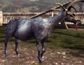 Goat Queen