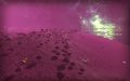 Callous Moon 1.jpg