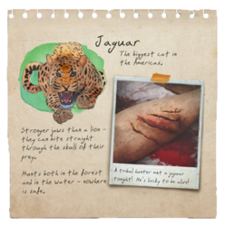 Jaguar Notebook Page (Tutorial).png