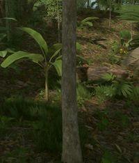 Tree -medium.jpg