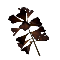 Plantain Lilly Flower Dryed.png