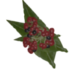 Psychotria Leaves.png