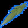 Molineria leaf.png