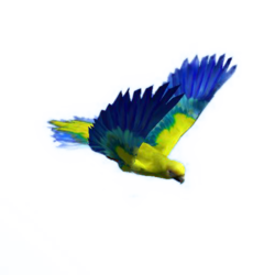 Hyacinth Macaw.png