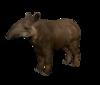 Tapir.png