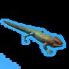 Caiman lizard.png