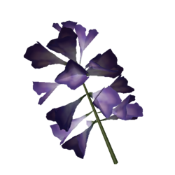 Plantain Lilly Flower.png