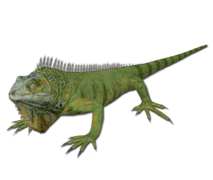 Iguana.png