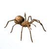 Goliath Birdeater Spider.png