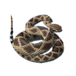 South American Rattlesnake.png