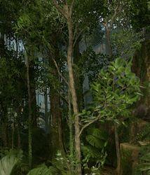 General Trees.jpg