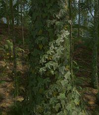 Tree -large.jpg