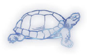Tortoise Constellation Icon.png