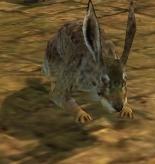 The Rabbit.jpg