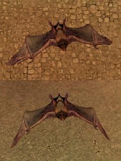 Asc Bats 1.JPG