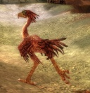 Moa Bird.jpg