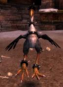 Onyx (pet).jpg