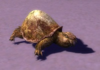 Young Turtle.jpg